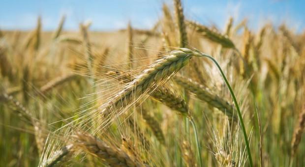 Dopłaty do nasion w 2018 r. szybciej?