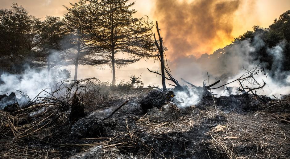 Koło Tarnobrzega płonęło 60 hektarów nieużytków