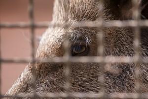 Bogucki: Potrzebna budowa ogrodzenia przed dzikami w związku z ASF