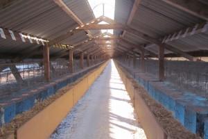 Maląg: konsekwencje ustawy o ochronie zwierząt dla branży futrzarskiej nie zachwieją rynkiem pracy
