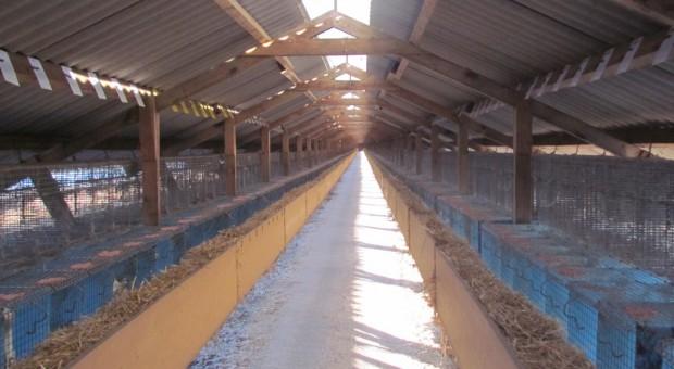 PZHiPZF: Decyzja utrzymaniu hodowli zwierząt futerkowych jest dobra