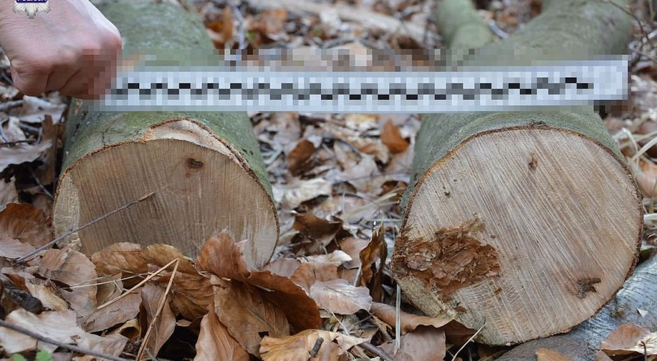 Wypadek przy wycince drzew. Mężczyzna przygnieciony ściętym drzewem