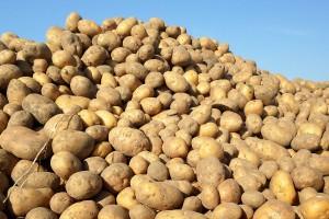 Szanse i zagrożenia dla rynku ziemniaka w Polsce