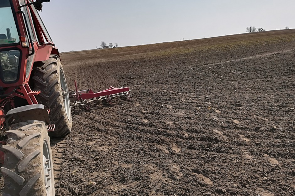 Najsłabsze plantacje rzepaku są obecnie likwidowane; Fot. A. Kobus