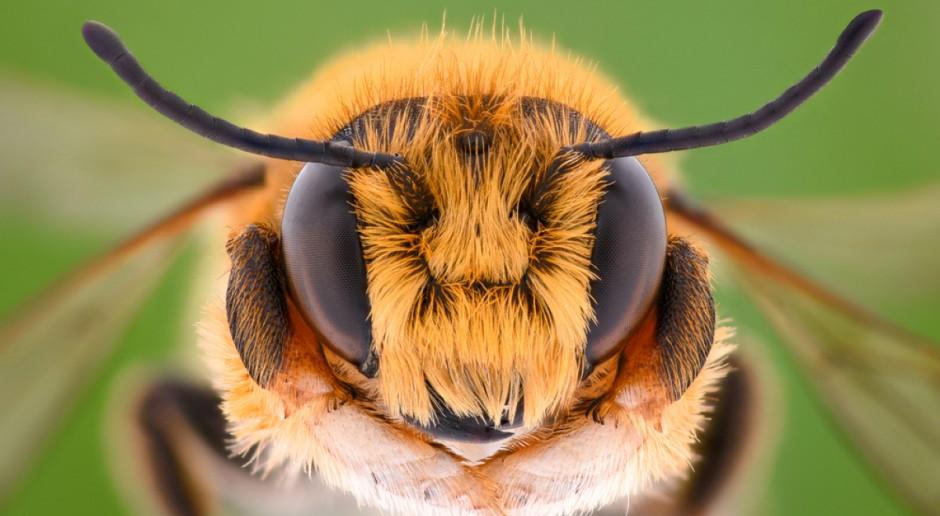 Apel do ministra rolnictwa, by cofnął zgodę na stosowanie szkodliwych dla pszczół pestycydów