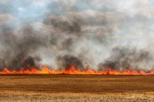 ARiMR ostrzega przed wypalaniem traw, grożą kary i cofnięcie dopłat