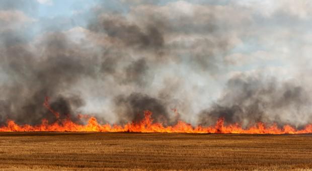 PSP: Prawie wszystkie pożary lasów i traw spowodowane podpaleniami lub nieostrożnością