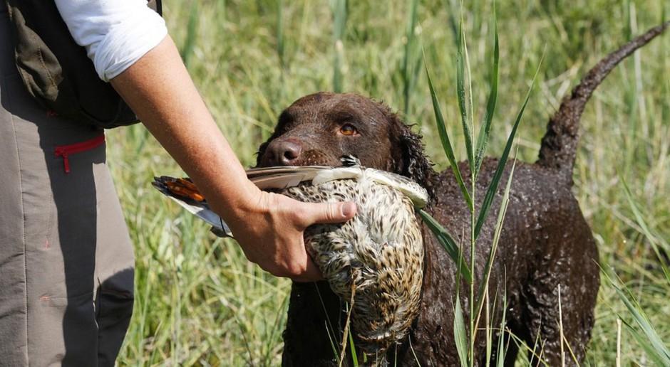 Nie chcesz polowania – nie dostaniesz odszkodowania