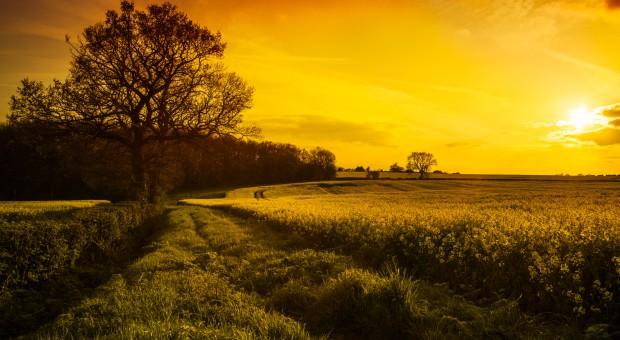 Ukraina: 500 tys. hektarów ziemi dla rolników