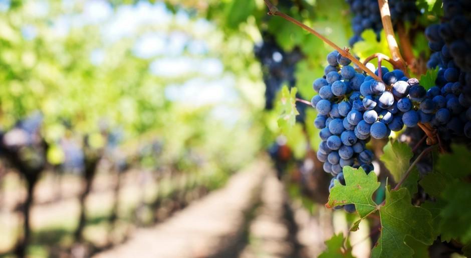 Prawie 60 proc. winnic w Podkarpackiem przyjmuje turystów