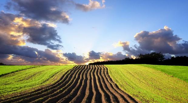 BZ WBK: Mniej ograniczeń w obrocie ziemią rolną usprawni transakcje