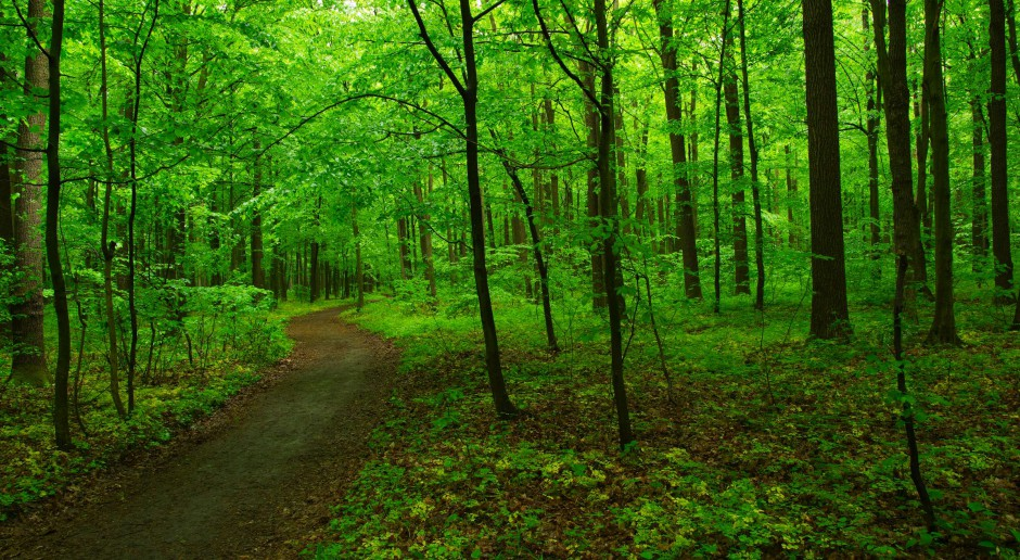 Nowoczesna zapowiada złożenie dwóch projektów ustaw o lasach