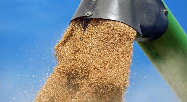 Niemiecka prognoza zbiorów zbóż prawie bez zmian