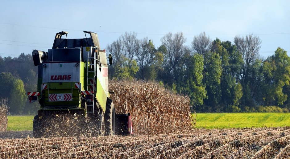 UE wkrótce największym importerem kukurydzy
