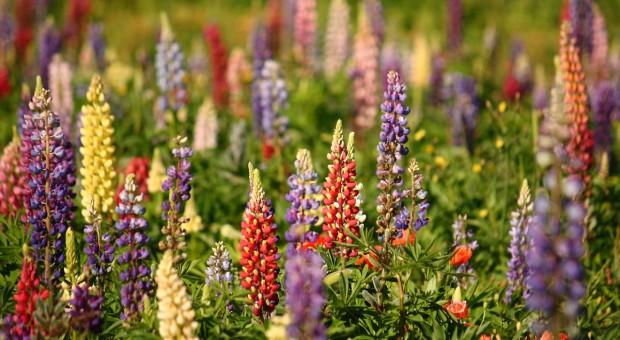 Europosłowie wzywają do wsparcia dla roślin wysokobiałkowych