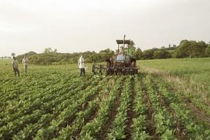 Usuwanie chwastów na plantacji soi (Brazylia) fot. mat prasowe