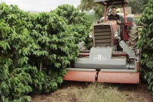 Plantacja kawy  fot. mat prasowe