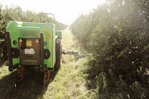 Pielęgnacja plantacji owoców  fot. mat prasowe