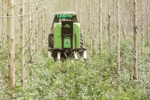 Usuwanie wysokich chwastów na plantacji Teczyny wyniosłej (Dąbu indyjskiego) fot. mat prasowe