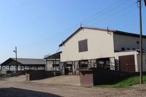 Obory w gospodarstwie są sukcesywnie modernizowane, w obiekcie widocznym na zdjęciu został dobudowany zewnętrzny stół paszowy