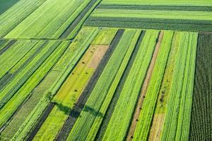 Kto nie musi w tym roku dywersyfikować upraw w ramach zazielenienia?