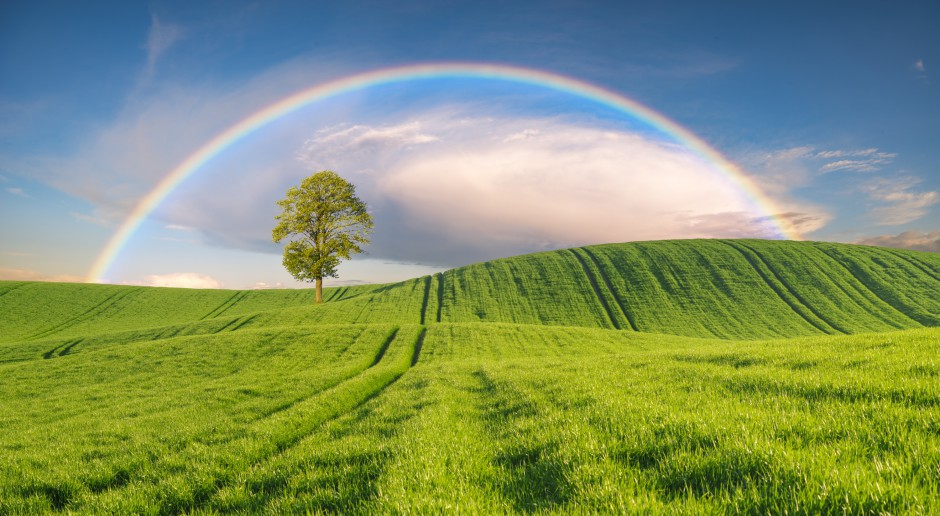 KOWR: Nieco potaniały państwowe grunty rolne