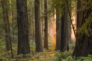 Tętno drzew - zsynchronizowane nocne ruchy gałęzi