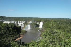 FAO: Coraz mniej lasów na świecie