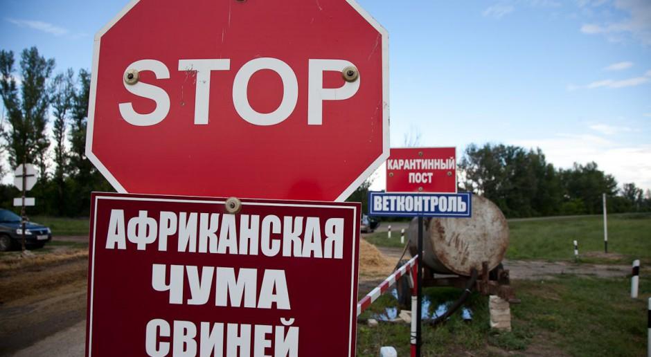 Świnie znikają - Białoruś zaprzecza, że to przez ASF
