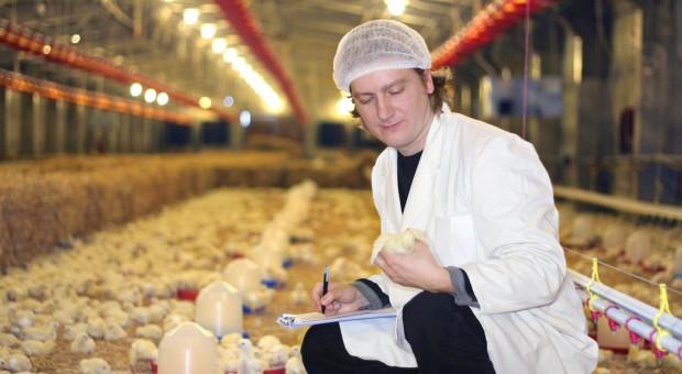 Branża drobiarska musi zmniejszyć zużycie antybiotyków