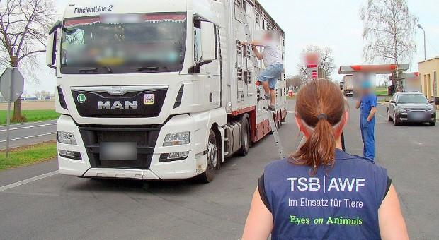 Inspektorzy wspólnie z obrońcami zwierząt kontrolowali ciężarówki