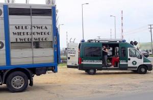 Akcje przeprowadzono na drogach w okolicy Leszna.