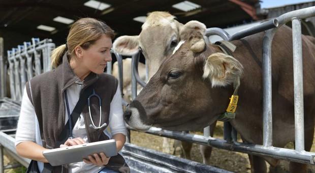 ABC chorób bydła – cały artykuł
