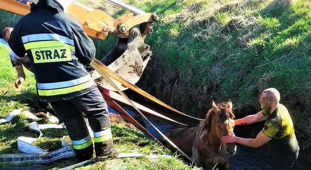 Strażacy ratowali konie w opałach