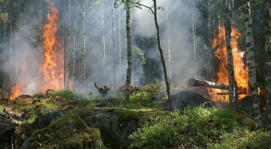 Średnie i duże zagrożenie pożarowe w większości lasów w Polsce