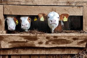 Leczenie zwierząt będzie udokumentowane w książce leczenia