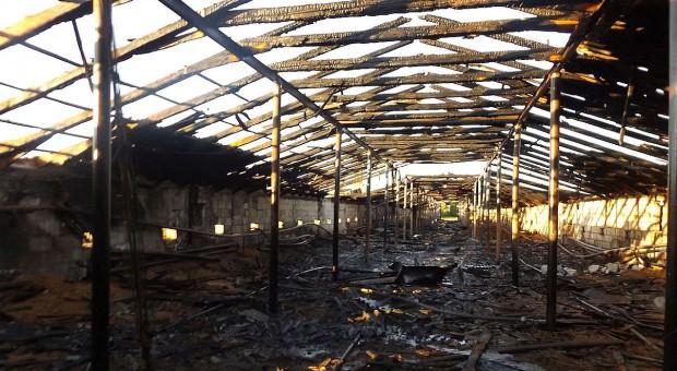 Pożar kurnika pod Kielcami. Spłonęło kilkanaście tysięcy kurczaków