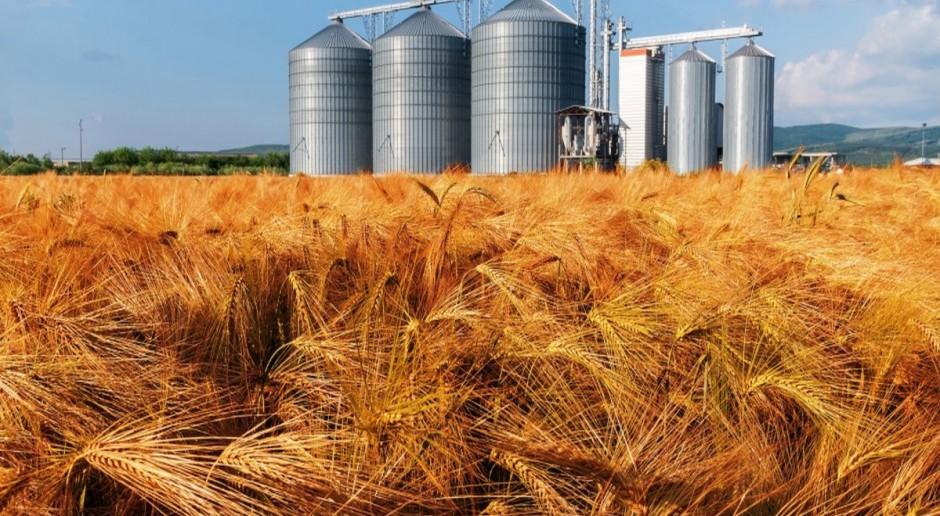 USDA: Mniejsza  produkcja pszenicy, większa zbóż paszowych