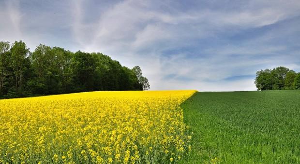 W tym roku ARiMR sprawdzi później dywersyfikację upraw
