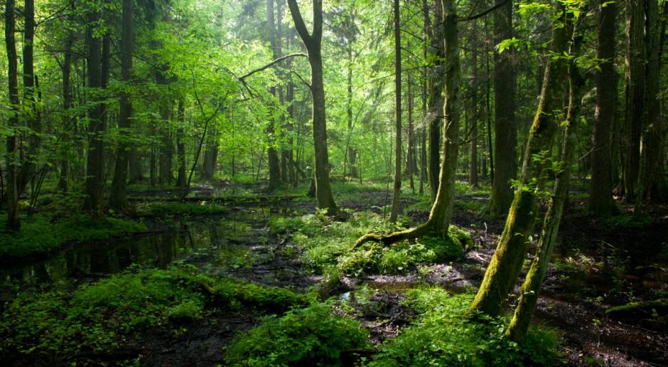 Minister Kowalczyk wydał polecenie uchylenia decyzji ws. usuwania drzew w Puszczy Białowieskiej