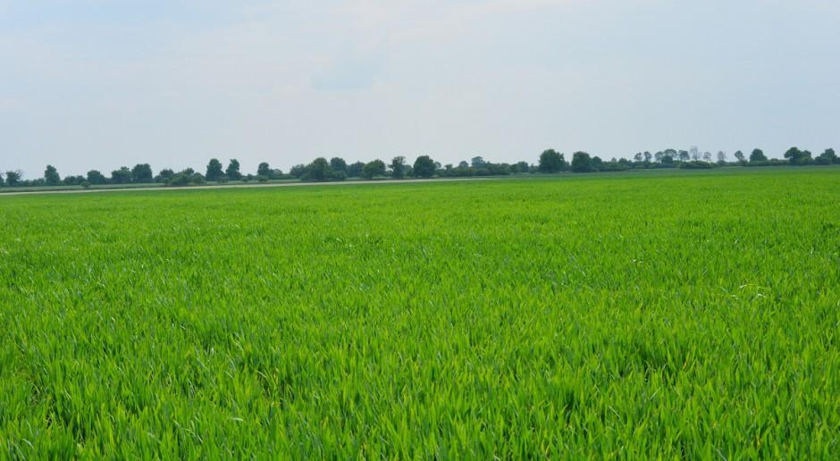 Fitosanitarny stan zbóż