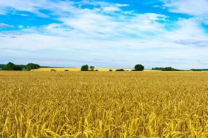 Firma Legat oferuje dzierżawę gruntów ornych o areale od 500  ha do 15 tys. ha. na Ukrainie.