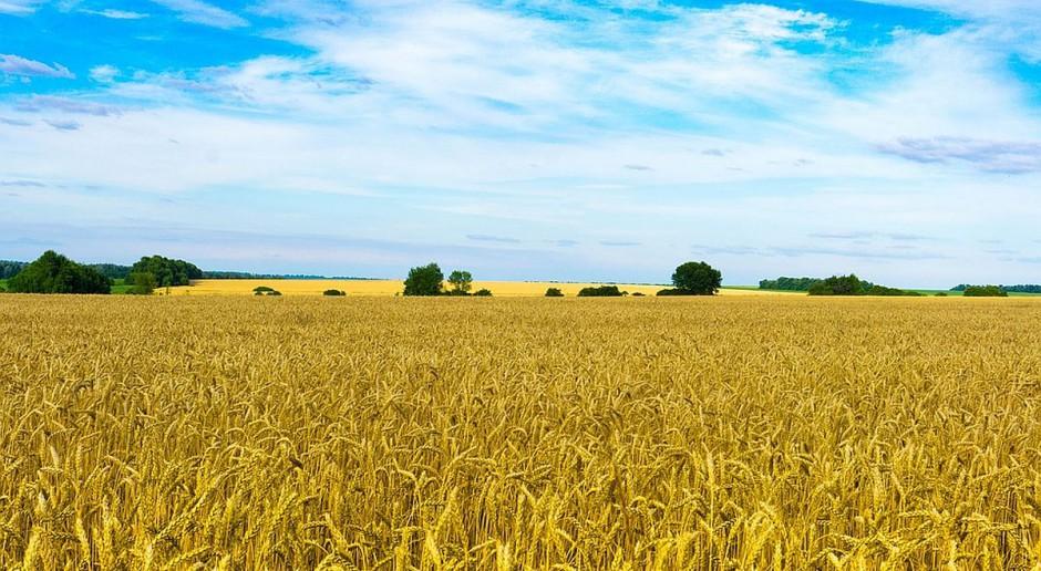 Ukraina: Nielegalna dzierżawa dotyczy 12 milionów hektarów