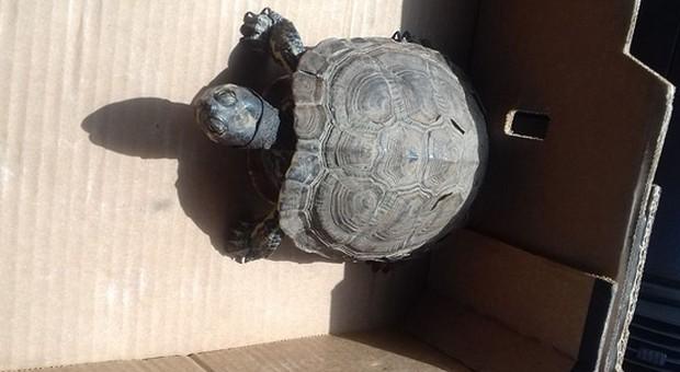 Po polu błąkał się bezpański… żółw. Interweniowała policja