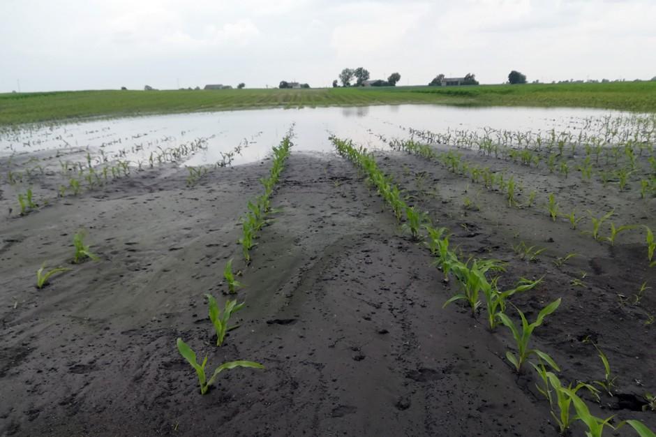 Powstałe zastoiska wody na wiele dni uniemożliwiły przeprowadzenie zabiegów ochrony roślin; Fot. A.Kobus