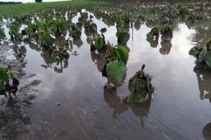 Woda zbierała się nawet w niewielkich obniżeniach terenu; Fot. A. Kobus