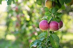 Producenci żywności szukają rynków przy wsparciu… banku