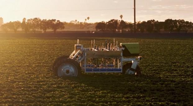 Kto zbierze truskawki? Może robot?