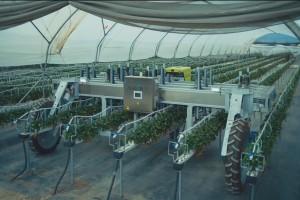 Agrobot może pracować zarówno w polu jak i pod tunelami fot. mat prasowe