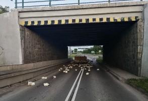 Kurczaki rozeszły się po drodze.